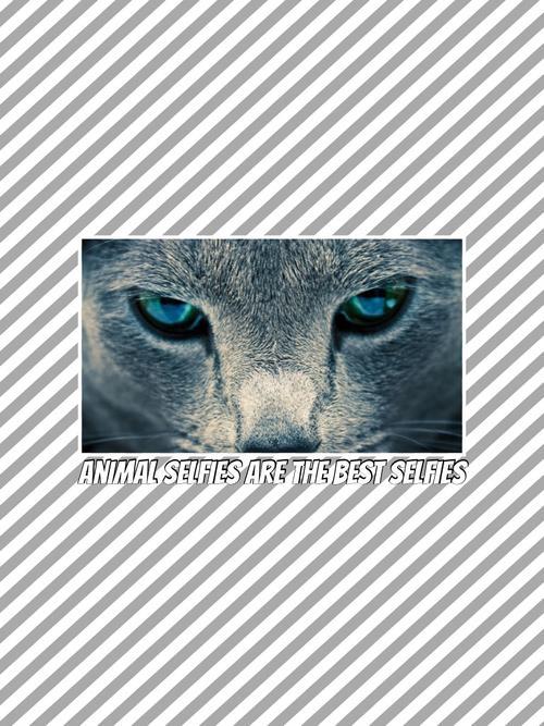 Assets?key=a3dea06bfbad491f38022313a61fa77d&collage id=164265252&size=500x500
